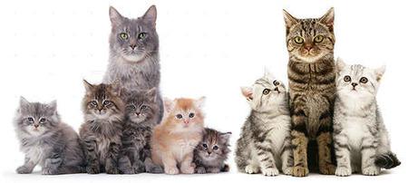стерилизация бесплатная кошек на Кипре, Alliance NC