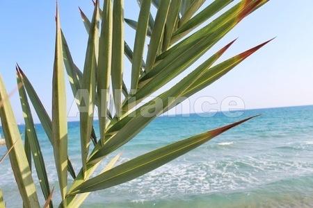 Северный Кипр в свете политических событий