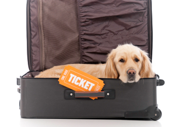 MOving with pets to cyprus